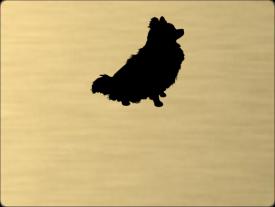 Tabuľka Pomeranian špic