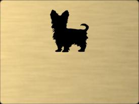 Tabuľka Maltézky psík